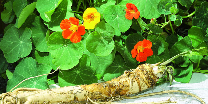 Pflanzliche Antiinfektiva bei akuten Atem- und Harnwegsinfekten