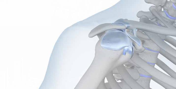 Schultergelenk Modul 1: Anatomie, Untersuchung und Bildgebung des Schultergelenkes