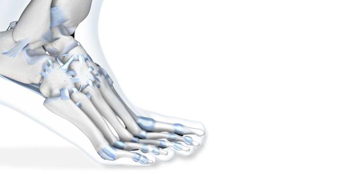 Sprunggelenk – Modul 1: Anatomie, Biomechanik und Untersuchung